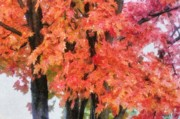Red Leaf Digital Art - Trees Aflame by Jeff Kolker