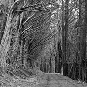 Black And White Photography Metal Prints - Trees Along Sandymount Track, New Zealand Metal Print by Atan Chua