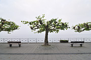 During Art - Trees and benches by Matthias Hauser