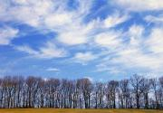 Bare Trees Posters - Trees And Clouds Poster by Natural Selection Tony Sweet