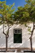 Lanzarote Prints - Trees and dappled light Print by Neil Buchan-Grant