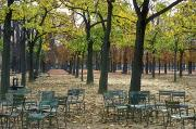 Fallen Leaves Posters - Trees And Empty Chairs In Autumn Poster by Stephen Sharnoff