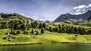 Graubunden Framed Prints - Trees And Lake In Grassy Rural Landscape Framed Print by Manuel Sulzer