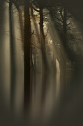 Crepuscular Rays Photos - Trees and Light by Andy Astbury