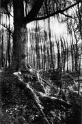 Monotone Prints - Trees at the entrance to the Valley of No Return Print by Simon Marsden
