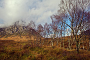 Argyll And Bute Prints - Trees below Stob Dearg Print by Gary Eason