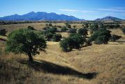 Rita Prints - Trees Below The Santa Rita Mountains Print by Bill Hatcher