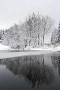 Winter Landscape Photos - Trees By The Lake by Michal Boubin