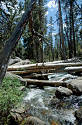 Branches Photos - Trees Down Merced River by LeeAnn McLaneGoetz McLaneGoetzStudioLLCcom