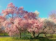YoMamaBird Rhonda - Trees in Bloom