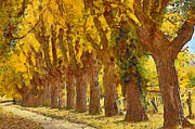 Warm Digital Art - Trees in fall - brown and golden by Matthias Hauser