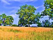 Amish Digital Art Framed Prints - Trees in Field Framed Print by Bill Cannon