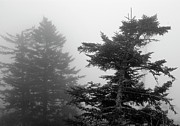 Trees In Fog Print by James Richardson