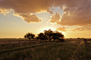 Field. Cloud Prints - Trees In Grass Field At Sunset Print by Franco Rostan