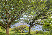 Hana Photos - Trees in Hana Maui Hawaii by Dustin K Ryan