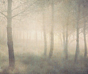 Painterly Photos - Trees In Mist On Linen by Paul Grand Image