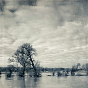 Photography.  Prints - Trees In River Rhine Print by Dirk Wüstenhagen Imagery