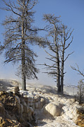 Bare Trees Prints - Trees In Sinter Terraces Near Palette Print by Richard Roscoe