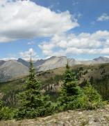 Collegiate Peaks Framed Prints - Trees in the Collegiate Peaks of Colorado Framed Print by Rhonda Van Pelt
