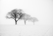 Minimalist Landscape Prints - Trees In The Mist Kingthorpe Print by Janet Burdon