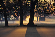 Sunshine Louisiana Framed Prints - Trees in the Morning Mist Framed Print by Jeremy Woodhouse