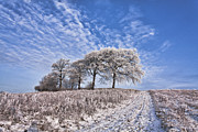 Winter Scene Metal Prints - Trees in the Snow Metal Print by John Farnan