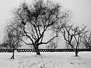 Trees In Winter Print by Dean Harte