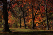 Connecticut Landscape Acrylic Prints - Trees of Autumn Acrylic Print by Karol  Livote