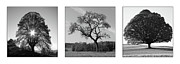 Ornamentally Prints - Trees On Canvas Print by Bruno Santoro