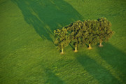 Natural Patterns - Trees on Green by Heiko Koehrer-Wagner