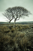 Martyn Williams - Trees On Moorland