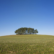 Cloudless Prints - Trees on the hill Print by Bernard Jaubert