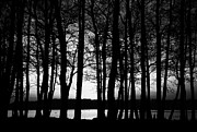 Lough Prints - Trees On The Shore Of Lough Neagh County Antrim Northern Ireland Print by Joe Fox