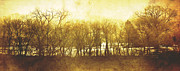 Amber Prints - Trees Pano Print by Scott Norris