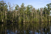 Waccamaw River Prints - Trees Reflected Print by Sally Weigand