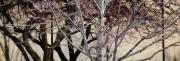 Linda Knorr Shafer - Trees Reflection