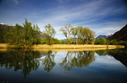 Tree Reflections Prints - Trees reflections on the lake Print by Mats Silvan