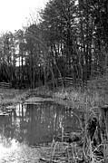 Terry Thomas - Trees with pond