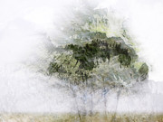 Motion Prints - Trees Within Trees Print by Carol Leigh