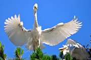 Egret Art - Treetop Landing by Roy Williams