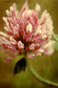 """textured Floral"" Photos - Trefle en Solo by Variance Collections"