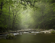 Little River Posters - Tremont in Fog Smokey Mountains Poster by Brian Stamm