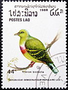 Stamp Collection Art - Treron Bicincta bird stamp. by Fernando Barozza