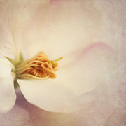 Pistil Prints - Tresfonds Heart Of A White Blossom Print by Priska Wettstein