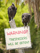 Vulture Framed Prints - Trespassers will be Eaten Framed Print by Wade Aiken