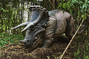 Cretaceous Prints - Triceratops Print by David Davis and Photo Researchers