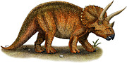 Reptiles Drawings - Triceratops by Roger Hall and Photo Researchers