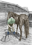 Shoe Drawings - Trim and Fit - Farrier and Horse Print Color Tinted by Kelli Swan