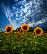 Trinity Print by Phil Koch