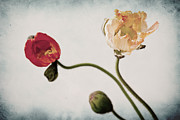 Floral Mixed Media Metal Prints - Trio  Metal Print by Angela Doelling AD DESIGN Photo and PhotoArt